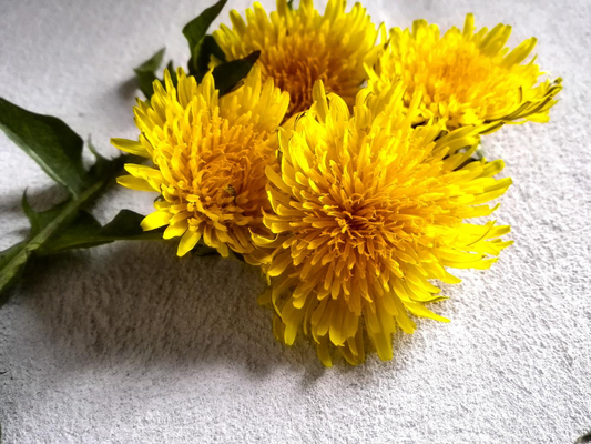 Yellow dandelions.